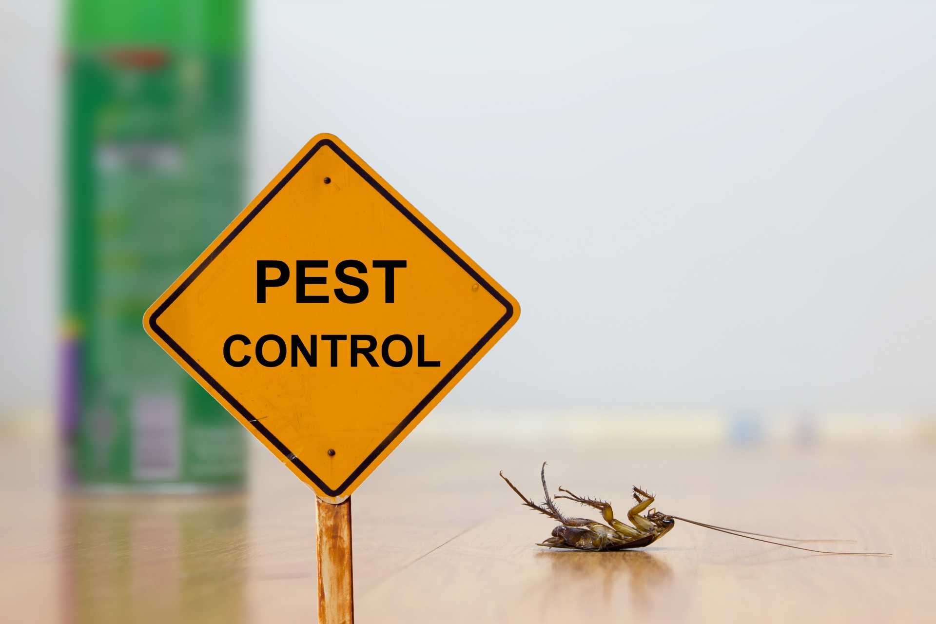 24 Hour Pest Control, Pest Control in Stratford, West Ham, E15. Call Now 020 8166 9746