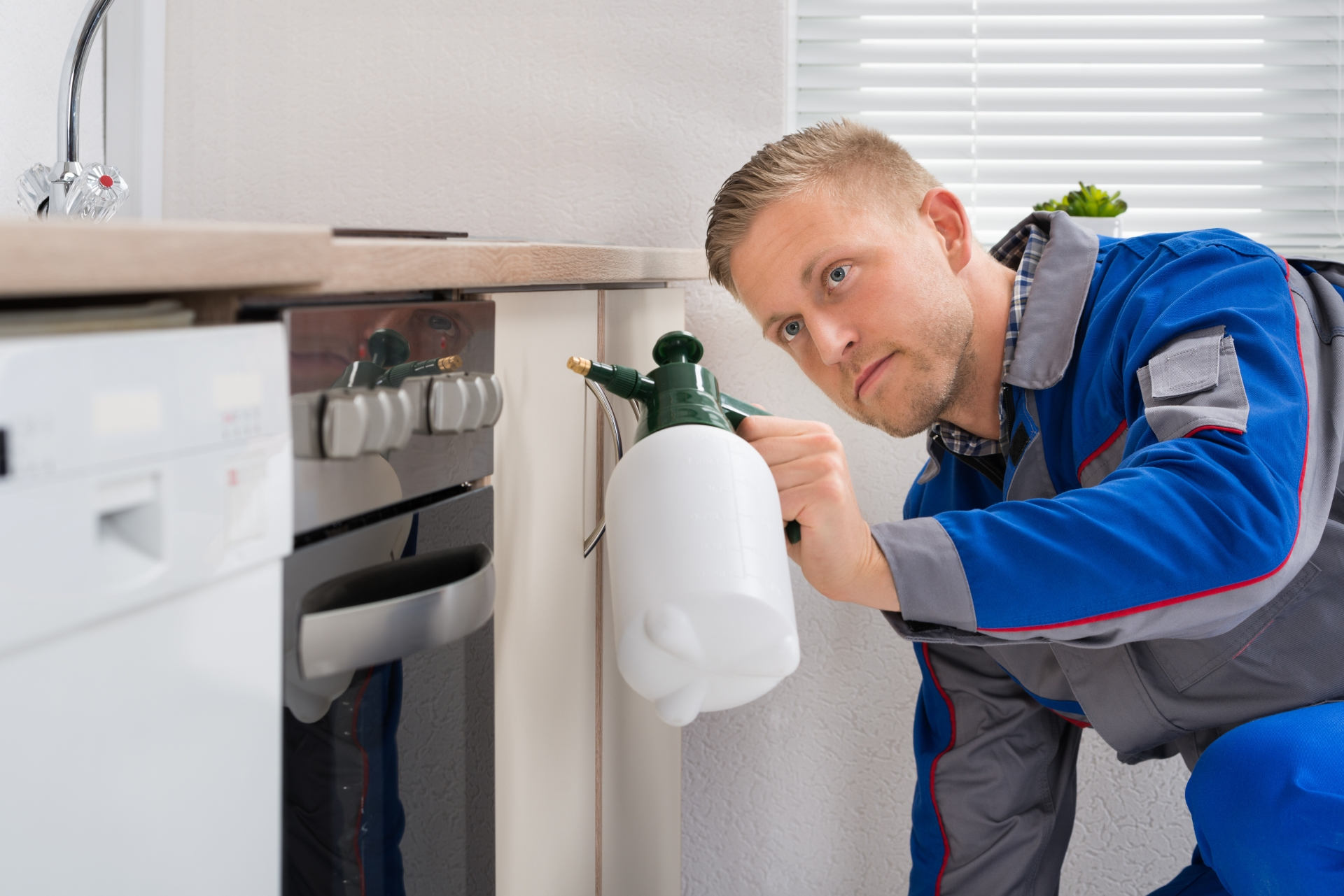 Pest Inspection, Pest Control in Stratford, West Ham, E15. Call Now 020 8166 9746